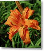 Garden With A Blooming Double Daylily Flowering Metal Print