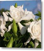 Gardenia Flowers Metal Print