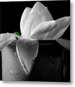 Gardenia In Coffee Cup Metal Print