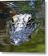 Gator And Dragonfly Metal Print