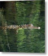 Gator In The Spring Metal Print