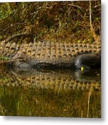 Gator Relection Metal Print