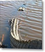 Gator Tail Metal Print
