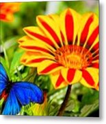 Gazania And Blue Butterfly Metal Print
