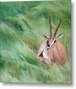 Gazelle In The Grass Metal Print