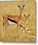 Gazelle Mother And Child Metal Print