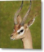 Gazelle Metal Print