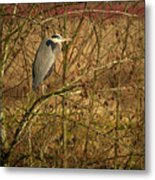 Gbh In A Tree Metal Print