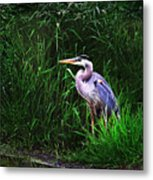 Gbh In The Grass Metal Print