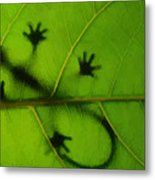 Gecko On A Leaf Metal Print