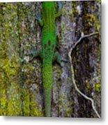 Gecko On Tree Bark Metal Print