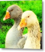 Geese Have Strong Affections For Others In Their Group Metal Print