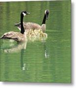 Geese And Babies Metal Print