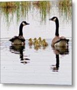Geese And Goslings Metal Print