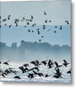 Geese And Gulls Metal Print