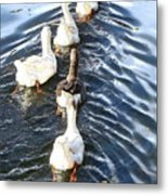 the Geese are leaving Metal Print