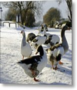 Geese At The Frozen Horninglow Basin Metal Print