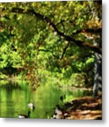 Geese By Pond In Autumn Metal Print