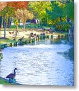 Geese In Pond 3 Metal Print