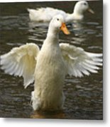 Geese In The Water Metal Print