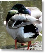 Geese Lovers Metal Print