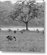 Geese On A Rainy Day Metal Print