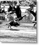 Geese On Ice Taking Flight Metal Print