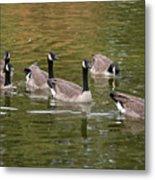 Geese On Pond Metal Print