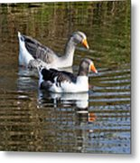 Geese On The Canal   Metal Print