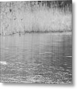 Geese On The River Metal Print
