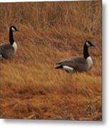 Geese On The Salt Marsh  Metal Print