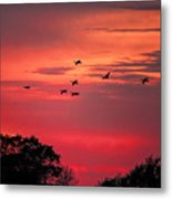 Geese On Their Sunset Arrival Metal Print