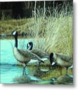 Geese On Watch Metal Print