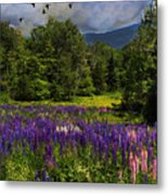 Geese Over Lupine Field Metal Print