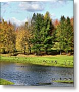Geese Sanctuary Metal Print