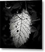 Gelatin Leaf Metal Print