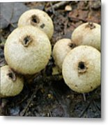 Gem-studded Puffball Mushroom Metal Print