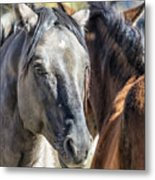 Gentle Face Of A Wild Horse Metal Print