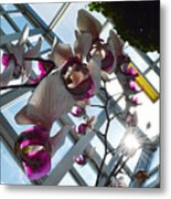 Gentle Giant Orchid Metal Print