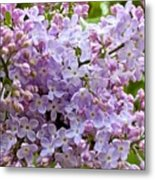 Gentle Purples Metal Print