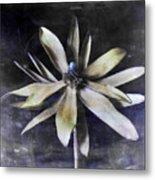 Genus Protea Metal Print