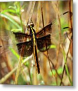 Georgia On My Mind Ray Charles Dragonfly Art Metal Print