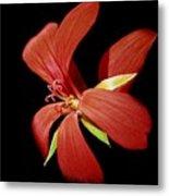 Geranium Flower Metal Print