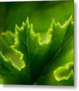 Geranium Leaf Metal Print