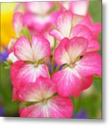Geraniums On A Brilliant Summer Day Metal Print