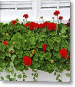 Geraniums On Window Metal Print by Elena Elisseeva