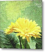 Gerber Daisy And Reflection Metal Print