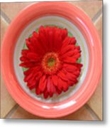 Gerbera Daisy - Bowled On Tile Metal Print