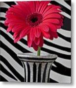 Gerbera Daisy In Striped Vase Metal Print