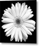 Single Gerbera Daisy Metal Print